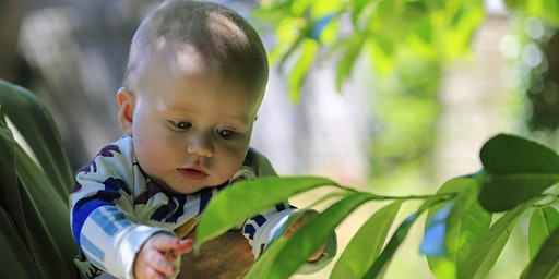 Where are the babies? Exploring outdoor provision for children from birth to two