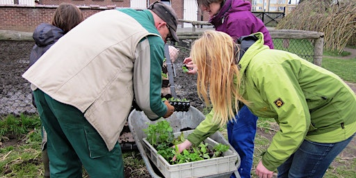 Workshop 'Start to moestuin' 2020 (namiddagsessie 13u - 16u30)