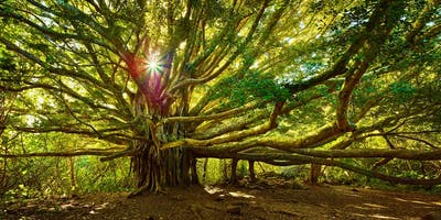 Building Confidence (Tree of Life) - Taster
