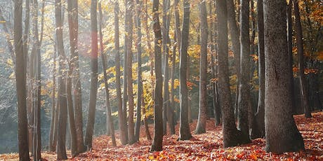 Forest Bathing Experience SW London  tickets