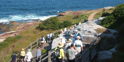 Coogee coastal walk and talk