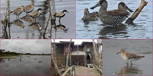 Wetland Discovery : Edithvale - Seaford 20 Jan 2020 : Chelsea Heights