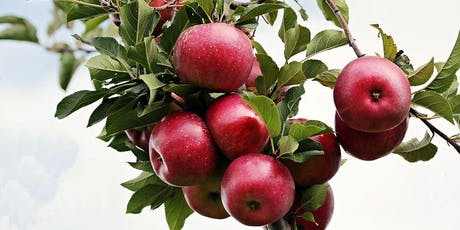 Apple Grafting Course tickets
