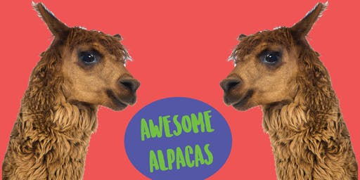 Awesome Alpacas - Kids Art Class