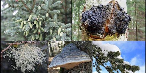 Initiation à la cueillette  de plantes et de champignons sauvages d'hiver