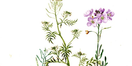 A Beginner's Guide to Botanical Drawing tickets