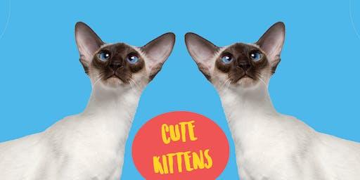 Cute Kittens - Family Art Class