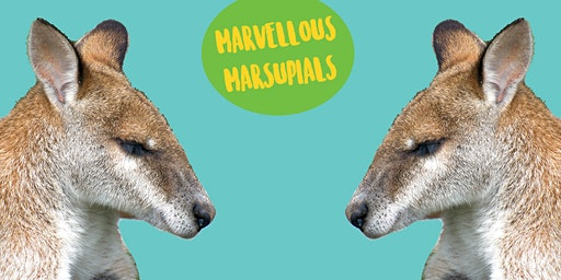 Marvellous Marsupials - Kids Art Class