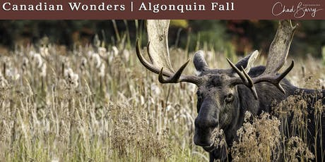 Canadian Wonders   Algonquin Photo Workshop - Autumn 2020 with Chad Barry tickets