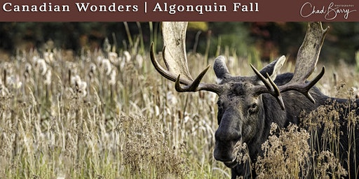 Canadian Wonders | Algonquin Photo Workshop - Autumn 2020 with Chad Barry
