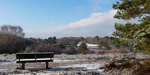 Walk off the Christmas Pudding 2019 - Yateley Common & Castle Bottom Nature Reserve