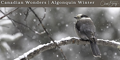 Canadian Wonders | Algonquin Photo Workshop - March 2020 with Chad Barry tickets