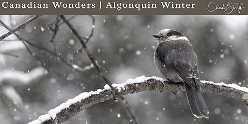 Canadian Wonders | Algonquin Photo Workshop - March 2020 with Chad Barry