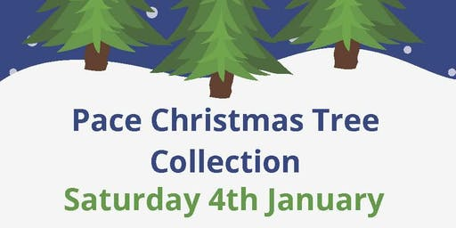 Pace Christmas Tree Collection