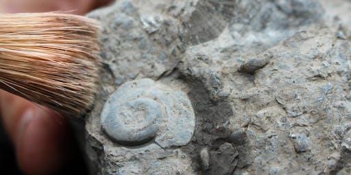 Et bien oui, il y a des fossiles à Montréal !