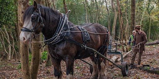 Horse Logging Course