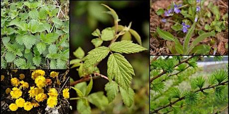 Initiation à la cueillette de plantes sauvages printanières billets
