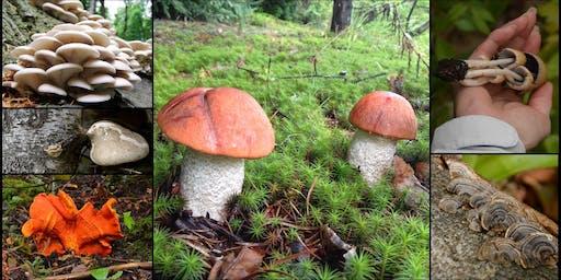 Initiation à l'identification de champignons sauvages