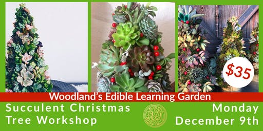 Succulent Christmas Tree Class in the Garden
