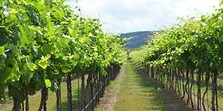 Wine and Cheese Pairing with Perissos Vineyard tickets