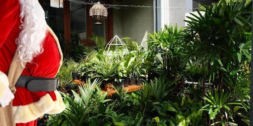 Brisbane - Huge Indoor Plant Warehouse Sale - Christmas Bonanza