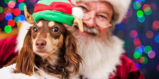 Malloy's Finest Santa Paws Photo Session Event