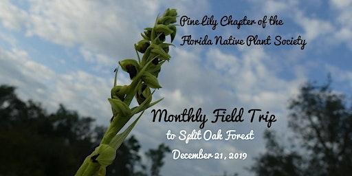 Pine Lily Field Trip to Split Oak Forest