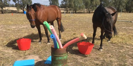Colts & Fillies school holiday & Power Tool skills for youth school holiday  program by Equine Empowerment by Pure Empowerment Psychology  tickets