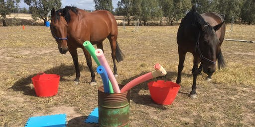 Colts & Fillies school holiday & Power Tool skills for youth school holiday  program by Equine Empowerment by Pure Empowerment Psychology