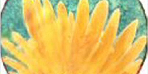 Silk Painting Workshop: Sunday Feb 16, 10:30-4pm