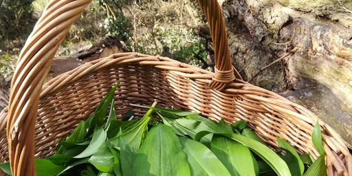 Know Your Edible Plants - May Day Nature Walk