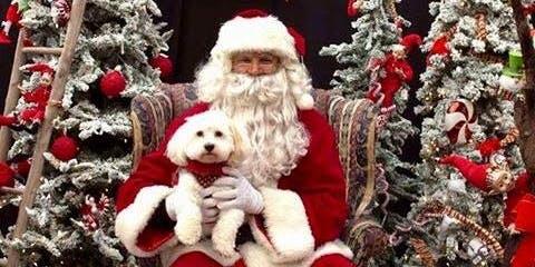 Collingwood Hyundai Free Santa Pics Weekend Dec 14-15