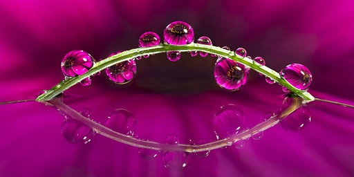 Macro Water Droplet Workshop with Don Komarechka