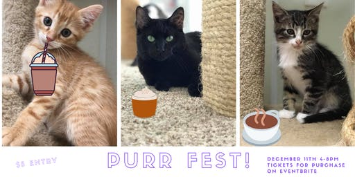 Decompress at Purr Fest!