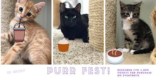 Decompress at Purr Fest!