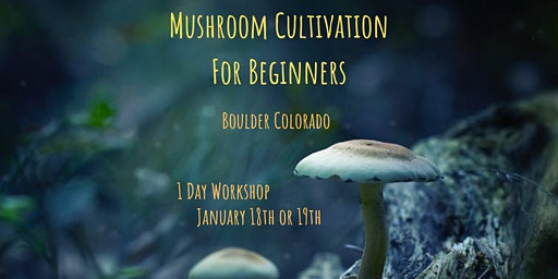 Mushroom Cultivation for Beginners