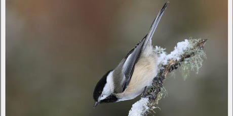 Forestry Farm Bird Walk tickets