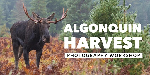 Algonquin Harvest - An Autumn Photography Workshop with a Local Guide!