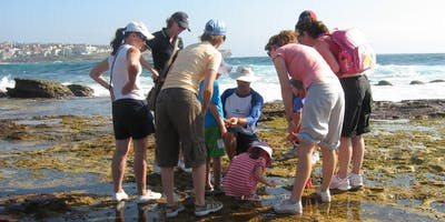 Rockpool Ramble at South Maroubra