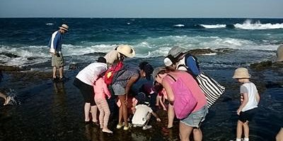 Rockpool Ramble at Little Bay
