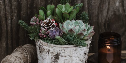 Holiday Succulent/Birch Pot Centeriece