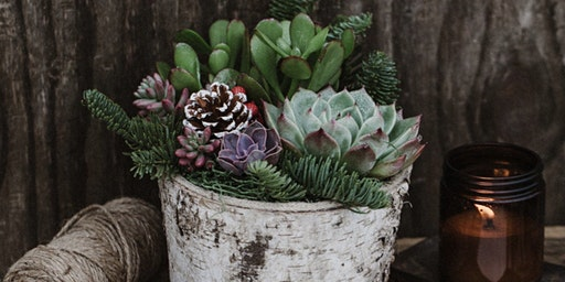 Holiday Succulent/Birch Pot Centeriece