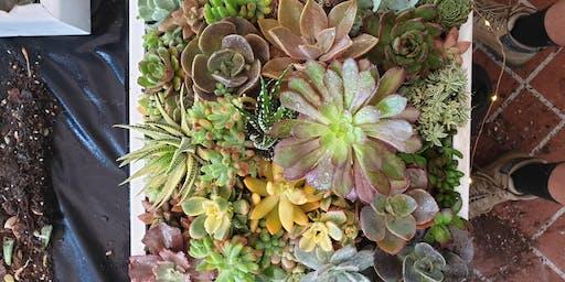 Succulent Wall Art Workshop *Burleigh Heads*
