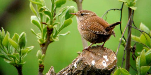 Birdwatching Class: songs and calls