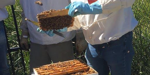 Sydney Bee Club Apiary Field Day