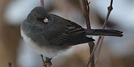 Birding Banshee tickets