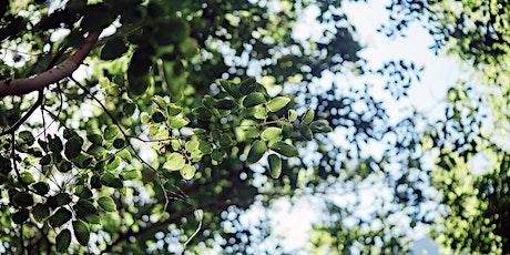 Italian Conversation Meet-Up - Botanic Gardens tickets