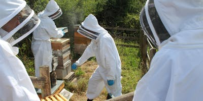 The Honey Bee and an Introduction to Beekeeping - evening sessions
