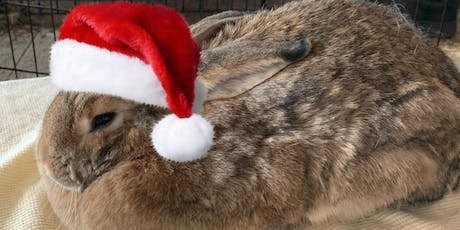 Beer for Buns at Better Half Brewing- the Holiday Version! tickets