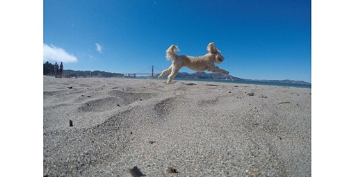 GoPro dog photos at the Golden Gate (2020-02-29 starts at 11:00 AM)